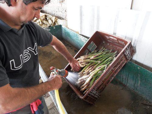 Premier lavage au jet d'eau